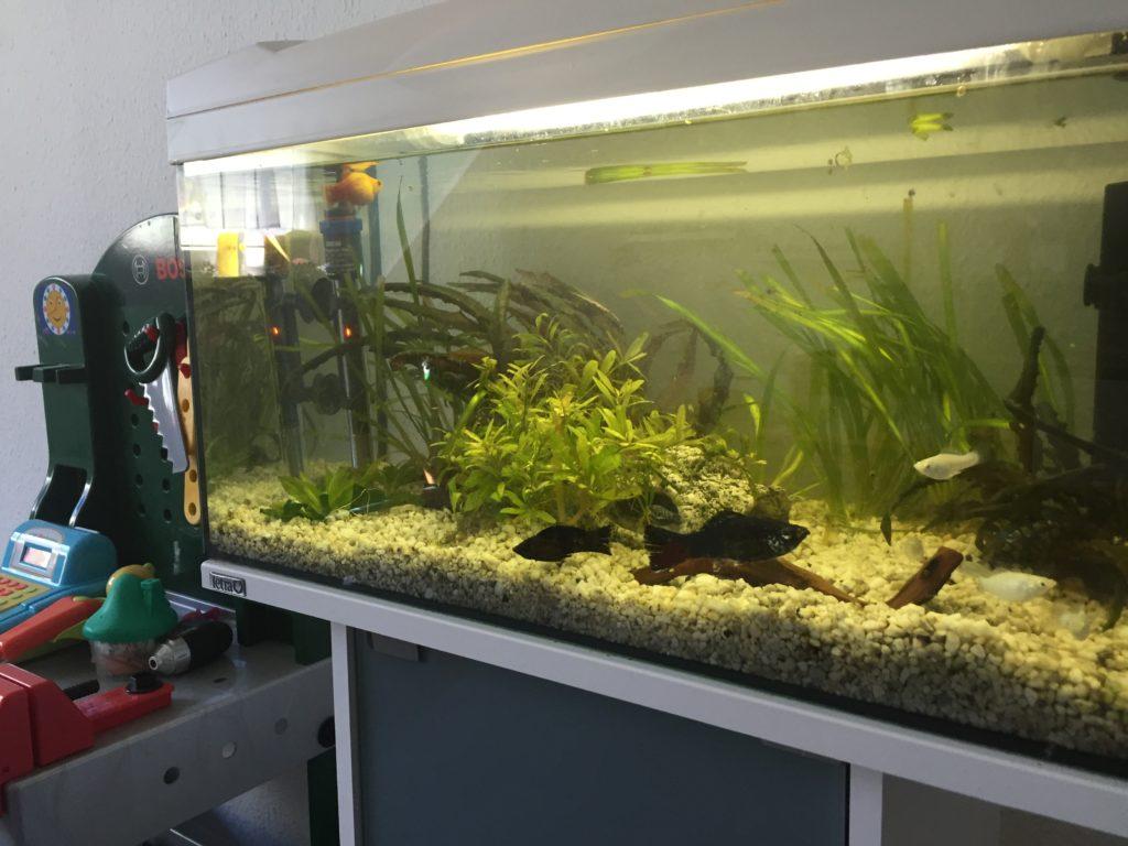 aquarium sauber machen wie macht man ein aquarium sauber. Black Bedroom Furniture Sets. Home Design Ideas