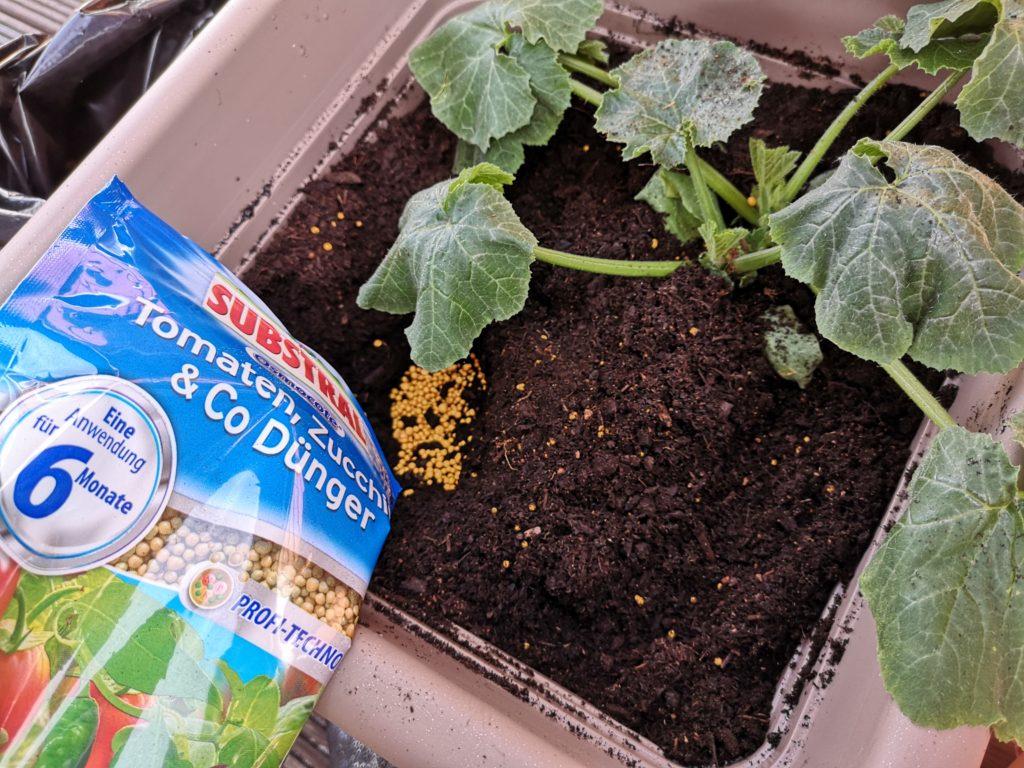Der Substral Tomaten, Zucchini & Co Dünger versorgt die Pflanzen mit allen Nährstoffen
