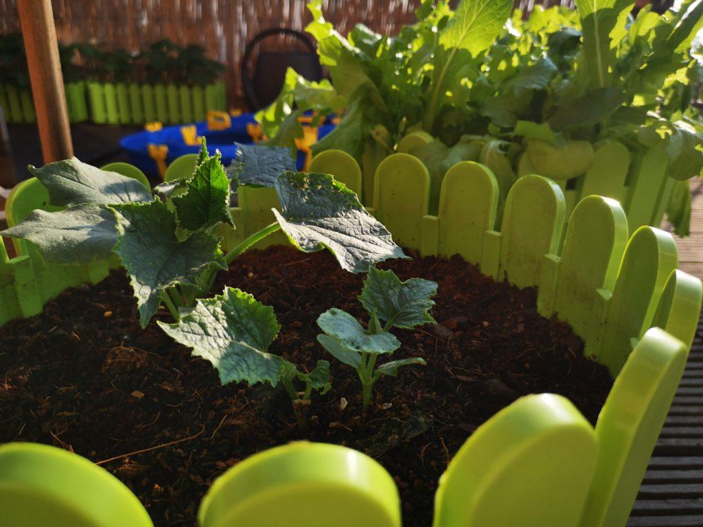 Die Pflanzen gedeihen wundervoll nach der Umsetzung