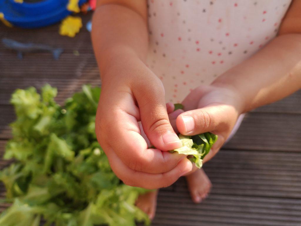 Frischer Salat aus dem eigenen Garten dank dem Salat-Mix von Substral