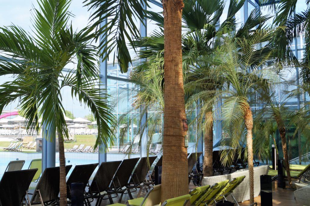 Wunderschöner, exotischer Palmengarten in der Therme Erding