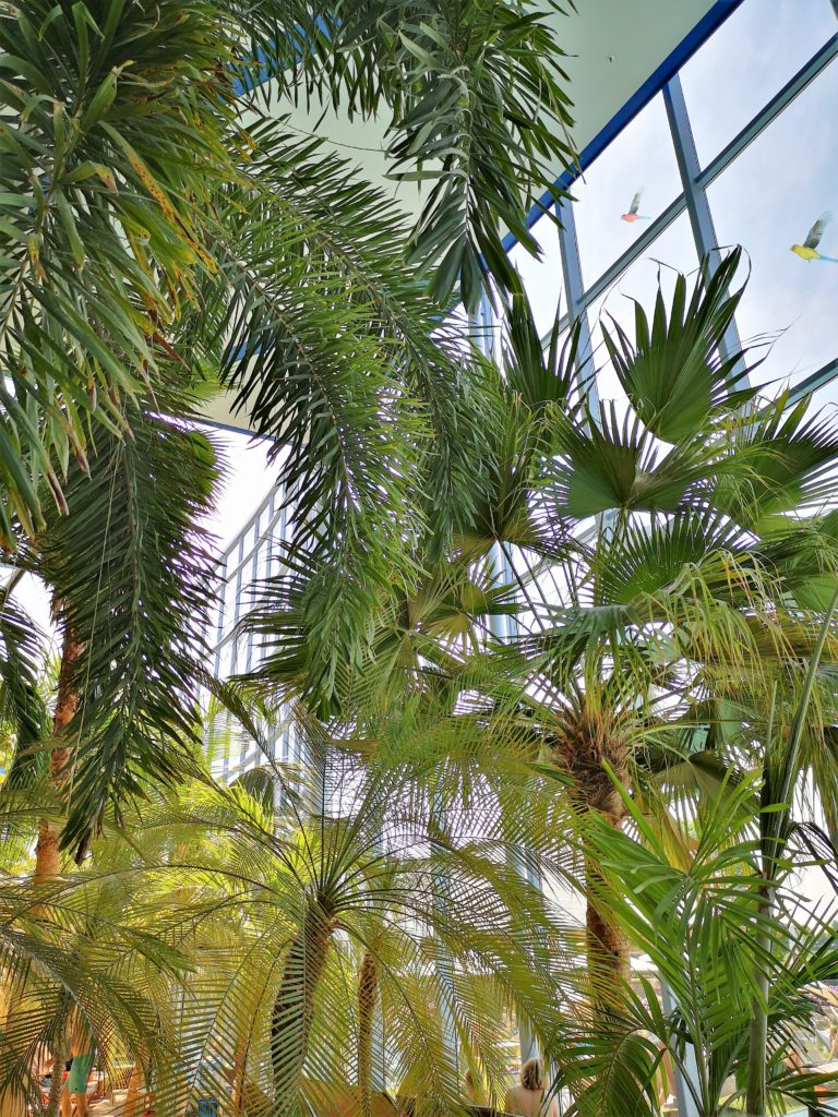 Palmen so weit das Auge reicht im Palmengarten der Therme Erding
