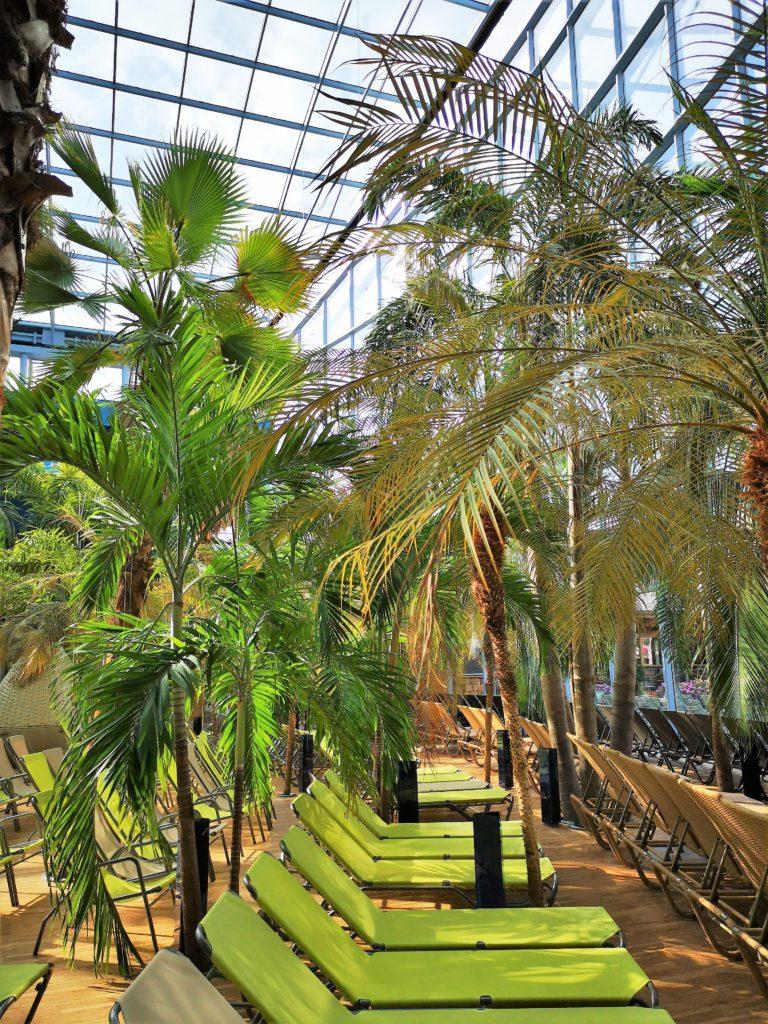 Entspannen unter Palmen in der Therme Erding
