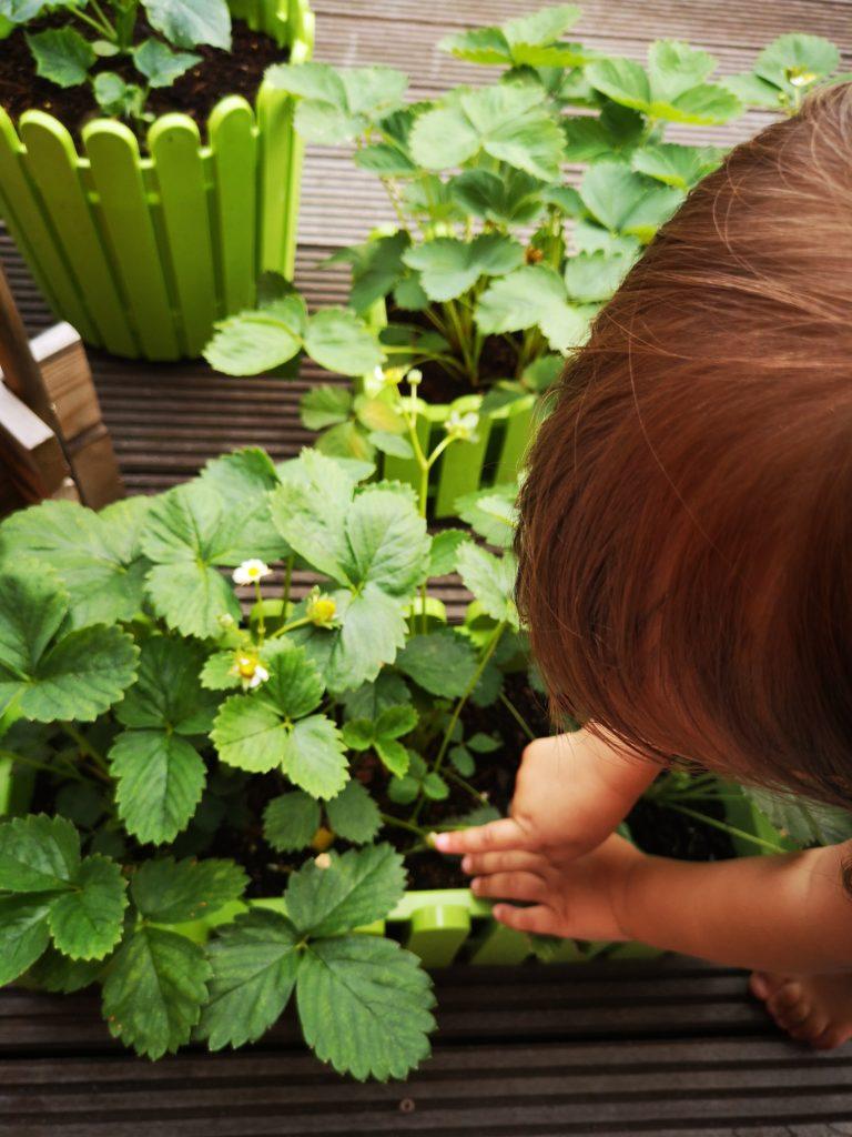 Mit Kindern eigenes Obst und Gemüse anpflanzen