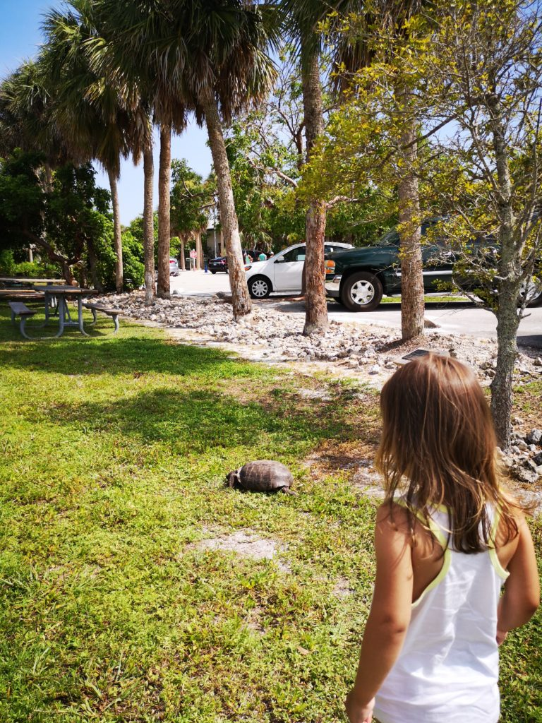 Turtle Watching in Florida