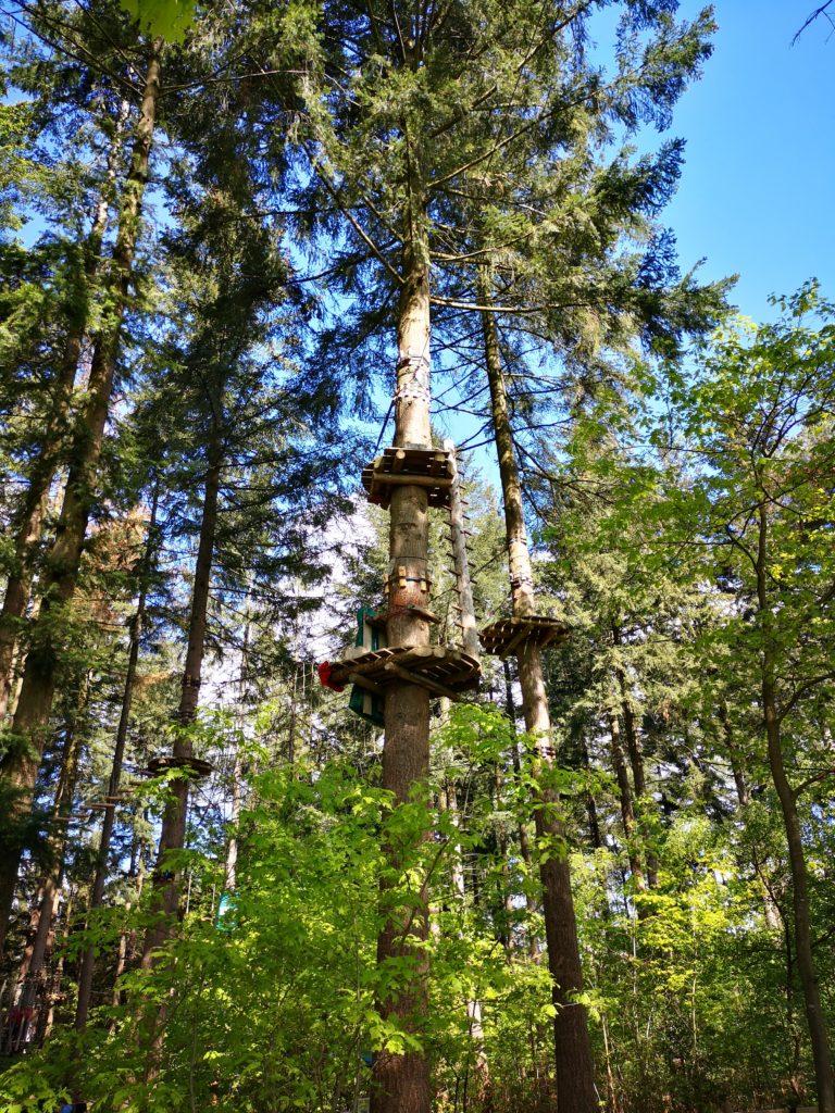 hoch hinaus geht es im avatarz kletterwald