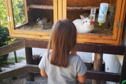 toll für kinder ist der wild- und freizeitpark in gackenbach