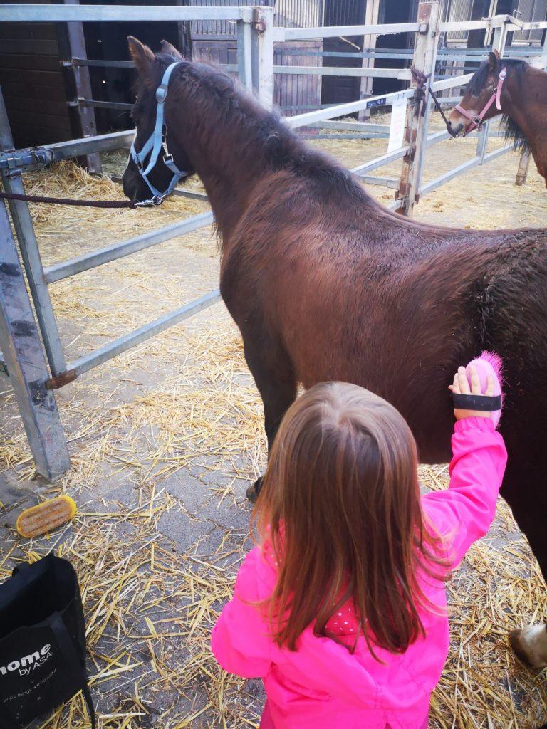 den umgang mit pferden lernen auf einem reiterhof