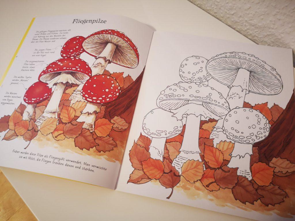 tolles ausmalbuch für kinder: natürlich bunt vom usborne verlag
