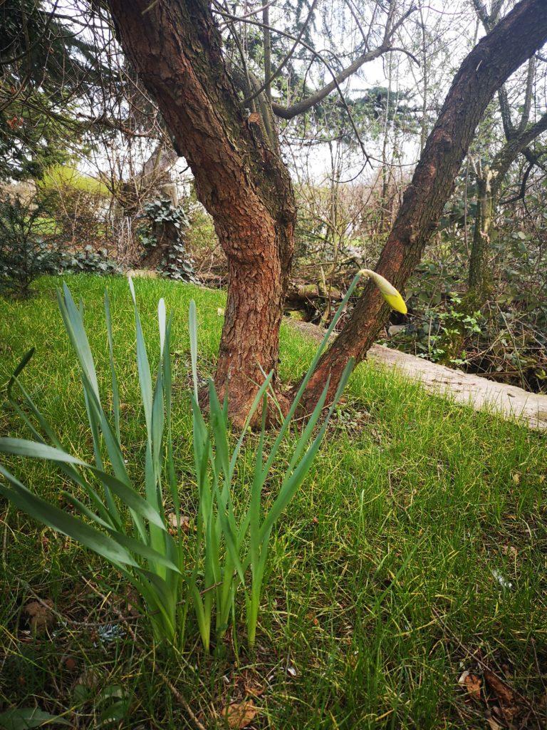 spielideen für draussen: selbst ausgesäte Blumen im Garten