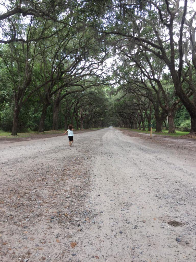 unter eichen entlang bei der wormsloe plantation