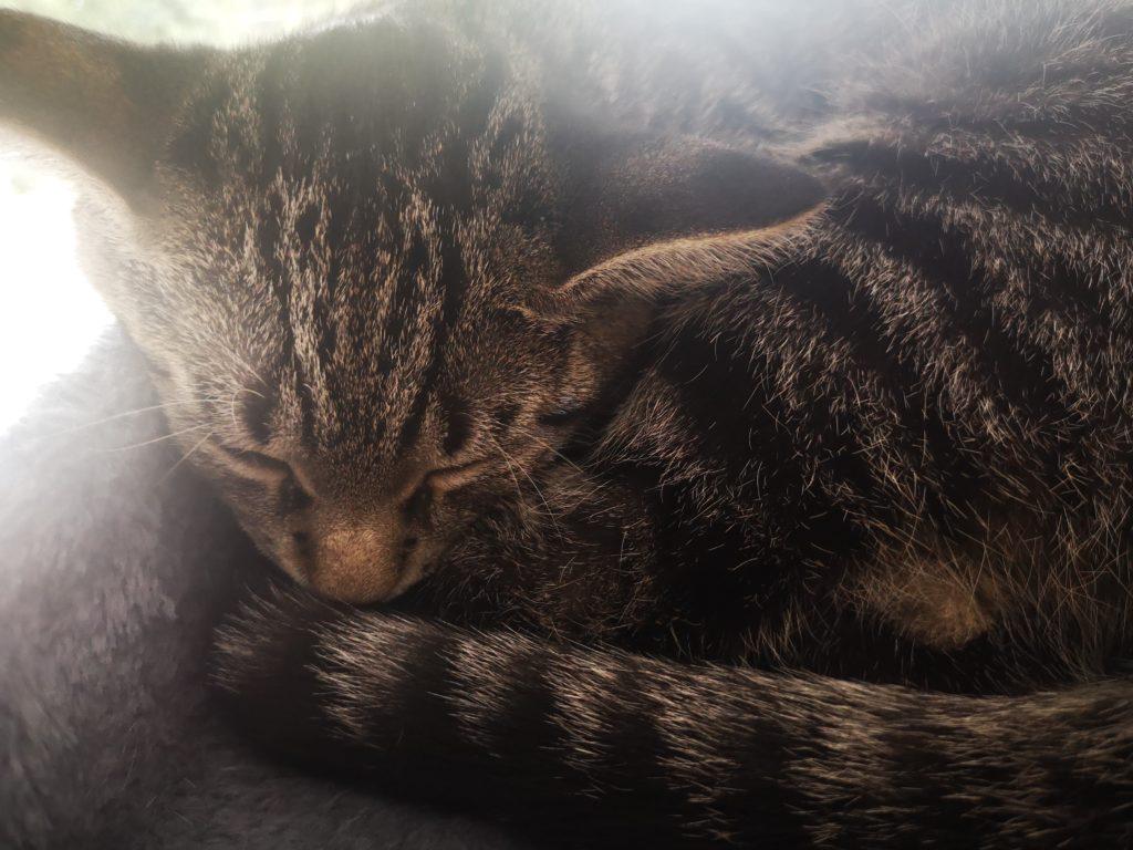 diego schläft