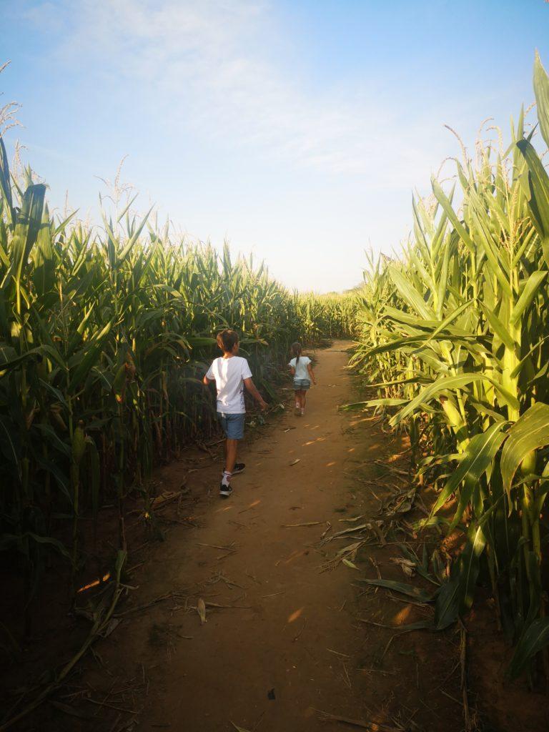 spaß gibt es im maislabyrinth